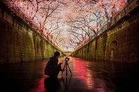 Главное весеннее событие в Японии