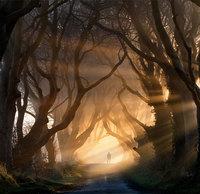 Потрясающие живые тоннели Северной Ирландии