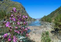20 уникальных снимков реки Катунь