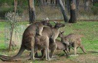 15 ужасающих снимков из Австралии. Такое не приснится даже в кошмарном сне!