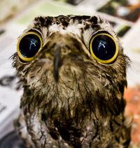 12 очаровательных животных, которые просто в шоке!