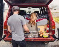 Самая знаменитая собака интернета отправилась на поиски эпических приключений со своим хозяином