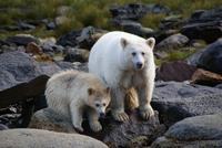 15 удивительных животных, которых ты наверняка еще не видел. Богатству фауны нет границ!