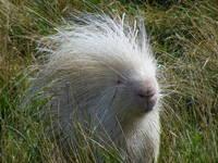 20 потрясающе красивых животных-альбиносов