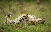 19 нереально веселых фото из жизни диких животных. Они — лучшие комедианты!