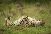 12 диких животных, которые заставили нас смеяться до упаду