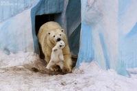 15 очаровательных семейных снимков животных. Сама нежность и любовь!
