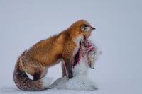 10 снимков поразительной дикой природы, которые были отмечены международной наградой!