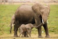 14 трогательных и забавных фото диких животных с их очаровательными детенышами