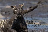 17 диких животных, которые знают толк в приключениях