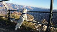 Кот-путешественник Гэндальф, который провел зимние каникулы лучше, чем ты!