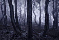 13 ошеломительных фото к сказкам братьев Гримм, сделанных дальтоником!