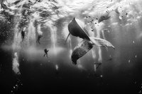 15 величественных снимков китов, на которые невозможно смотреть без восторга