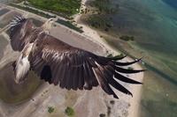 20 обалденных снимков, взглянув на которые ты пожалеешь, что не родился птицей