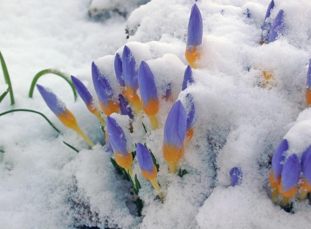 15 прекрасных и радостных снимков о том, что весна наступила c47fb70acf0