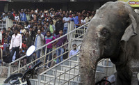 Взбесившийся слон ворвался на улицы индийского города
