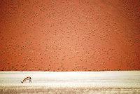 20 лучших тревел-снимков с фотоконкурса National Geographic
