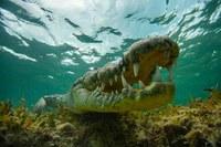 Россиянин Михаил Коростелев стал призером конкурса Underwater Photographer of the Year 2016
