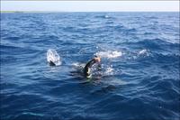 Как поймать за хвост акулу?