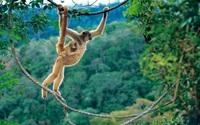 На грани исчезновения: 15 редчайших животных, которых может не стать до 2020 года