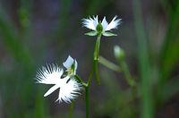 23 фото удивительных цветов, которые похожи на что угодно, только не на цветы