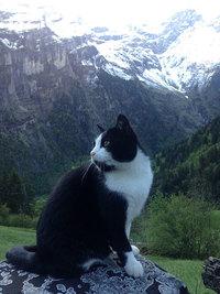 Он заблудился в швейцарских горах, когда на его пути повстречался этот кот