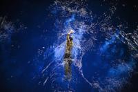 10 немыслимо прекрасных фото, претендующих на победу в конкурсе Sony World Photography Awards 2017