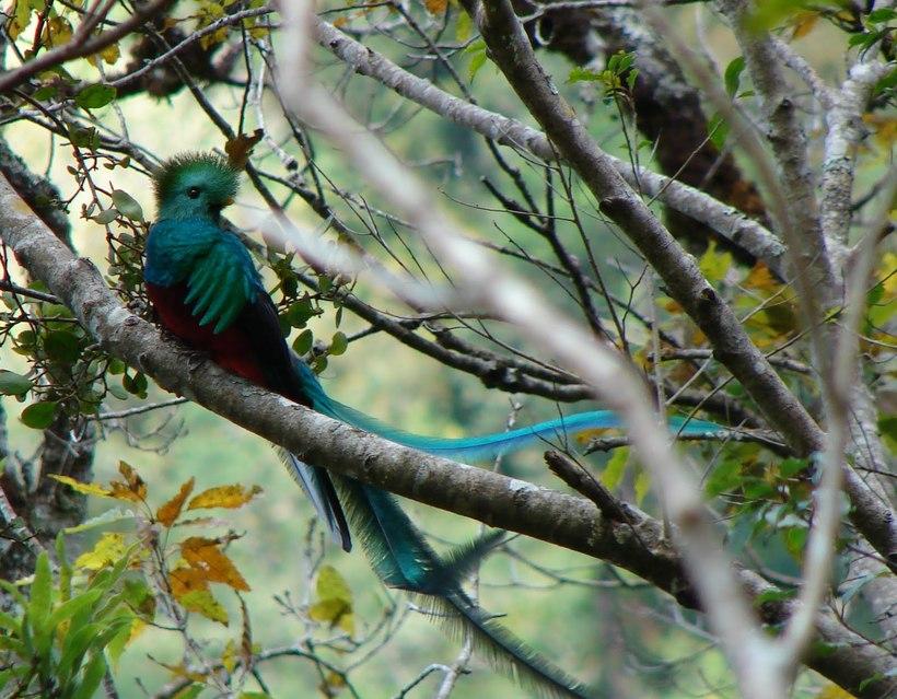 Гватемала Гватемала El Quetzal Guatemala Arjoneando