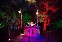 Королевские ботанические сады Кью создали грандиозную иллюминацию к Новому году