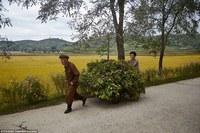 Нигде не показывают и не рассказывают, как живет элита Северной Кореи