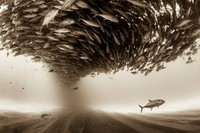 20 самых сильных снимков финалистов конкурса Sony World Photography Awards 2017