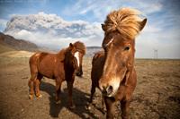 10 классных фото животных со всего мира, которые выглядят как рок-звезды