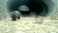 10 потрясающих мостов и переходов для животных, спасающих тысячи зверей ежегодно
