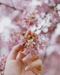 20 завораживающих фото из японского Инстаграма о том, что весна пришла!