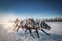Объявлены снимки-финалисты Смитсоновского конкурса фотографий 2016 года