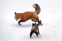 Примеры удивительного поведения животных, в реальность которых трудно поверить