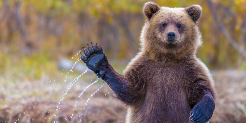 медведей прикольные фото