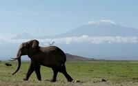 19 увлекательных снимков живой природы, сделанных за последние недели по всему миру
