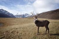 19 кадров о том, насколько умопомрачительна дикая природа вокруг нас