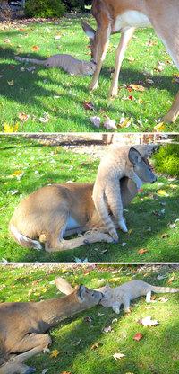 10 смешных животных, которые просто зашли поздороваться