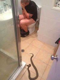 22 доказательства того, что не стоит ехать в Австралию, если вы боитесь змей