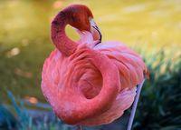 10 фото великолепных фламинго — птиц, пришедших в этот мир из сказки