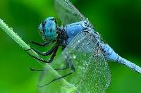 Что случится, если все насекомые в один миг исчезнут?