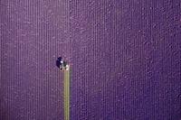 10 лучших дрон-фотографий 2017 года