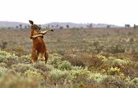 10 смешных фото дикой природы, претендующих на победу в Comedy Wildlife Photography