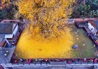 20 самых удивительных и прекрасных деревьев со всего мира, похожих на чудо