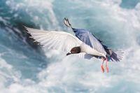 11 потрясающих фото, победивших на конкурсе, посвященном Галапагосским островам