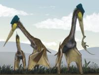 Птерозавры: какие загадки скрывают летающие рептилии