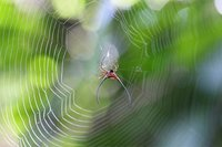 ТОП-7 самых красивых (и ужасных) пауков