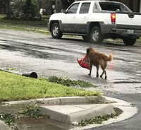 10 самых мощных и драматичных фото о том, как «Харви» бушевал в Техасе